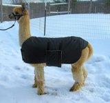 Alpaca Jacket Volwassen Medium Gewicht_