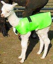 Alpaca Jacket Licht Gewicht