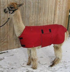 Alpaca Jacket Volwassen Medium Gewicht