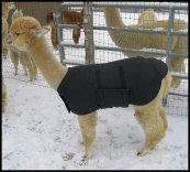Alpaca Jacket Volwassen Klein Medium Gewicht